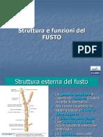 Il_fusto