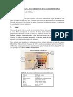 Manual Descripci n de Rocas Sedimentarias Cl Sticas 04-10-2017