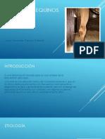 Bursitis en Equinos Junior Alexander Camero Gallardo