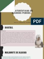 Características de Algunos Perros