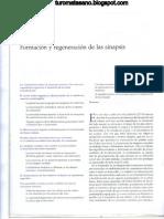 Capitulo 55 - Formacion y regeneracion de sinapsis.pdf