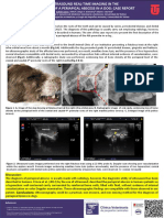 Ultrasound Real-time Imaging in the Diagnosis of a Periapical Abscess in a Dog- Case Report