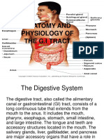 Anatomy and Physiology of the g