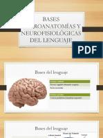 Bases Neuroanatomías y Neurofisiológicas Del Lenguaje