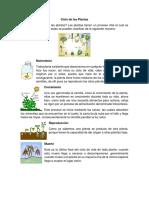 Ciclo de Las Plantas