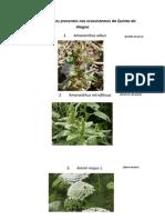 Herbologia Ficha de Identificação