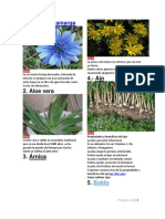 30 Plantas Medicinales Con Imagen