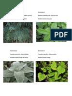 Plantas medicinales Amazonía Ecuatoriana