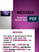 Meiosis Reductiodivision
