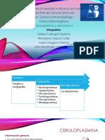 Ceruloplasmina y Citocromo C