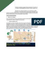 biofertilizantes.docx