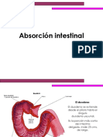 Absorcion Intestinal 1