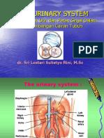 dr. Sri L kul-urine