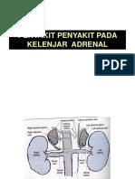 Kelj Adrenal