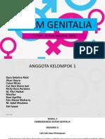 Genitalia Pleno