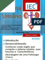 sistema Urinario  dia 18.ppt