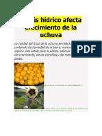 Estrés hídrico afecta crecimiento de la uchuva.docx