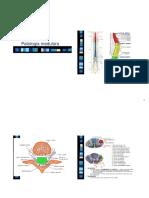 7 Medular SLA