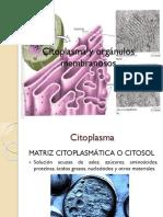 Citoplasma y Orgánulos Membranosos