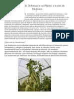 Inductores de Mecanismo en Las Plantas y Vegetacion