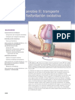Bioquímica Mckee. Transporte electrónico.pdf