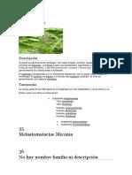 botanica general mariela.docx