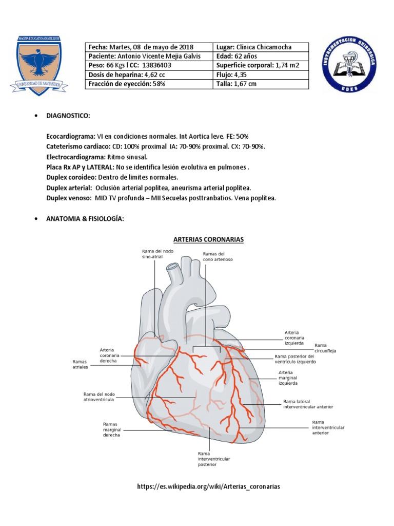 Lujo Anatomía De La Arteria Coronaria Y La Fisiología Foto ...