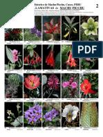 Copia de IMAGENES DE PLANTAS DE MACHUPICCHU.pdf