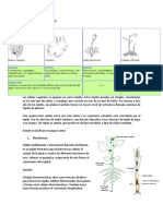 BIOLOGIA .docx