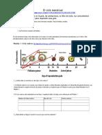 el ciclo menstrual.pdf