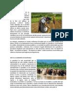 Agricultura en Guatemala