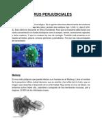 Los Virus Perjudiciales y Beneficiosos