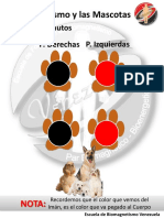 Protocolo Bio Mascotas