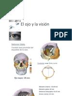 PDF de Vision y Audicion