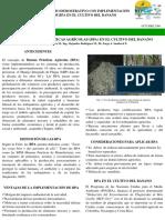 BPA EN EL CULTIVO DE BANANO.pdf