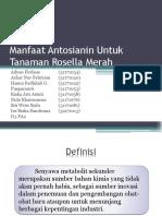Antosianin Untuk Tanaman Rosella Merah.pptx