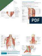 Anatomia Visão geral dos Musculos do Torax