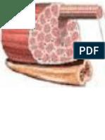 Estructura del Musculo Esqueletico