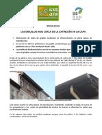 La destrucción de Nidos de Grajilla en Vitoria_Gasteiz pone al borde de la extinción a la especie en el País Vasco
