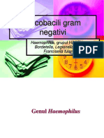 Curs Cocobacili Gram Negativi