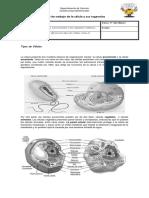 Guía de Trabajo de La Célula y Sus Organelos