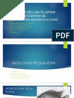 BIOMETRIA-DE-LAS-TILAPIAS-DEL-CINPIS.pptx