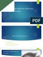 BIOMETRIA-DE-LAS-TILAPIAS-DEL-CINPIS_02.pdf