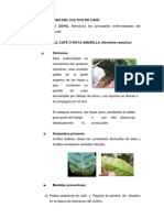 ENFERMEDADES DEL CULTIVO DE CAFÉ.docx