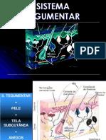 sistemategumentar-130916192910-phpapp02