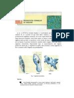 Scanat(Biologie)