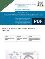 Tractos (s. Nervioso)
