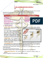 8º Patologia Del Sistema Nervioso Central I (2)