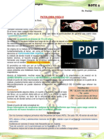 6º Patologia Osea II
