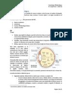 #06 Semiología Oftalmológica